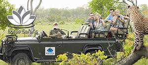 Lotus Safari